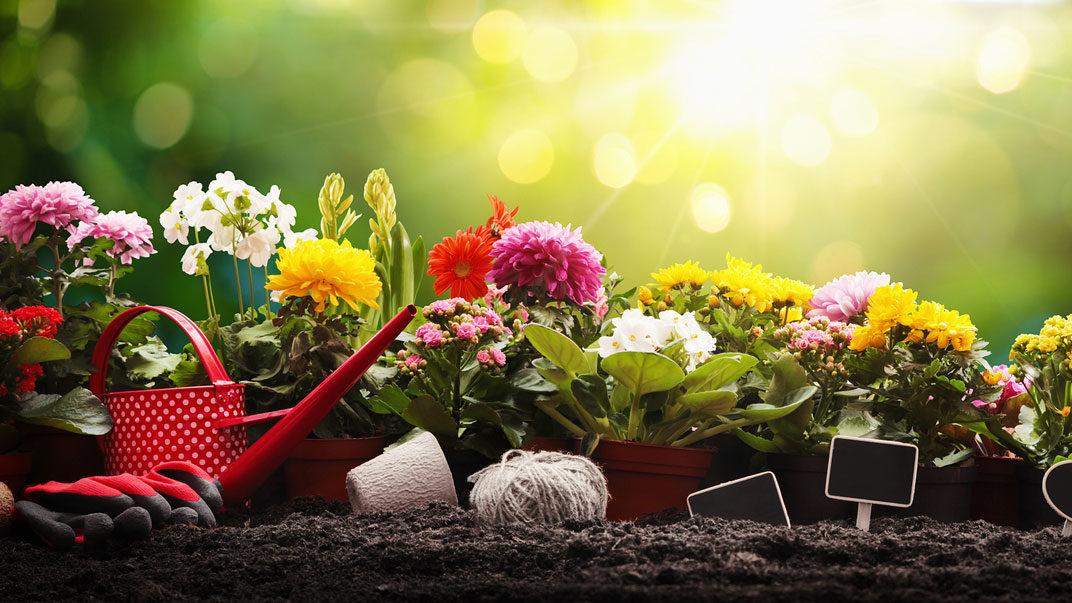 Gardenerdy