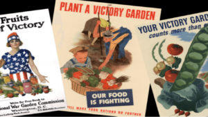 seeds for victory gardens