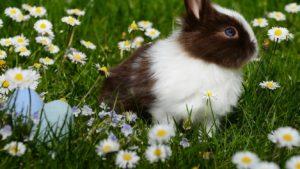 Adorable rabbits love yard weeds.