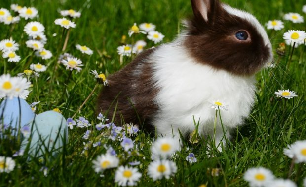 Adorable rabbits love yard weeds.