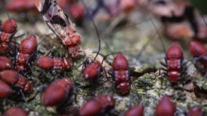 Termites in mulch can be a big problem.