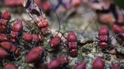 Termites in mulch can be a big problem.