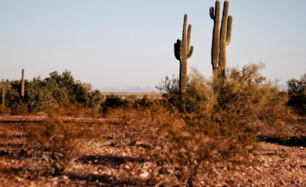Cacti and grass grow among common Texas weeds.