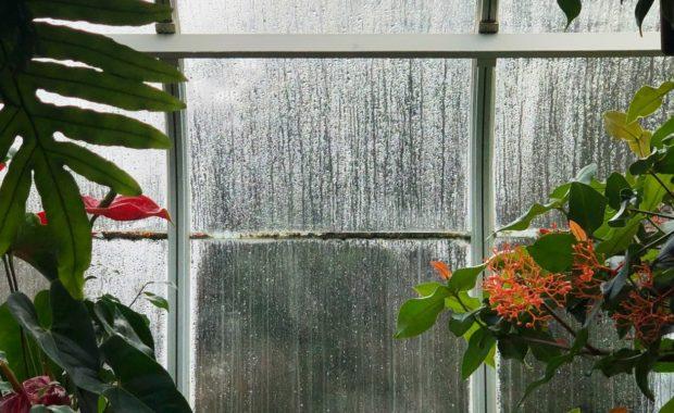 Organic weed control leads to beautiful gardens.