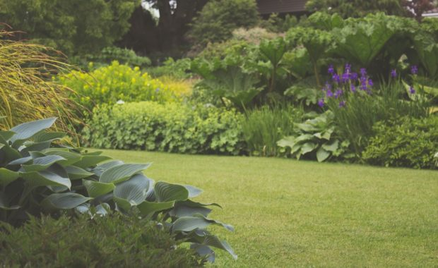 picture of beautiful lawn and garden
