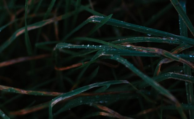 close up of grass