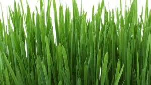 Close-up image of grass